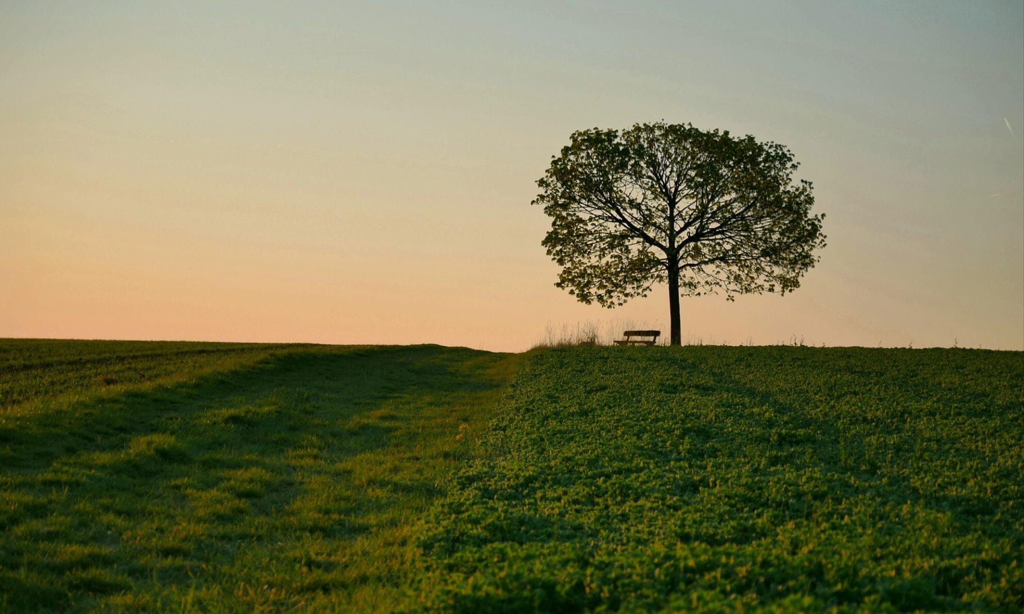 Wiki-tree